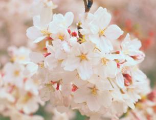 亂花漸欲迷人眼 這些春花到底誰是誰?